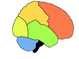 Red:Frontal lobe