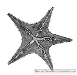 Starfish Illustration provided by Classroom Clip Art (http://classroomclipart.com)