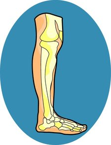 Knee Clipart provided by Classroom Clip Art (http://classroomclipart.com)